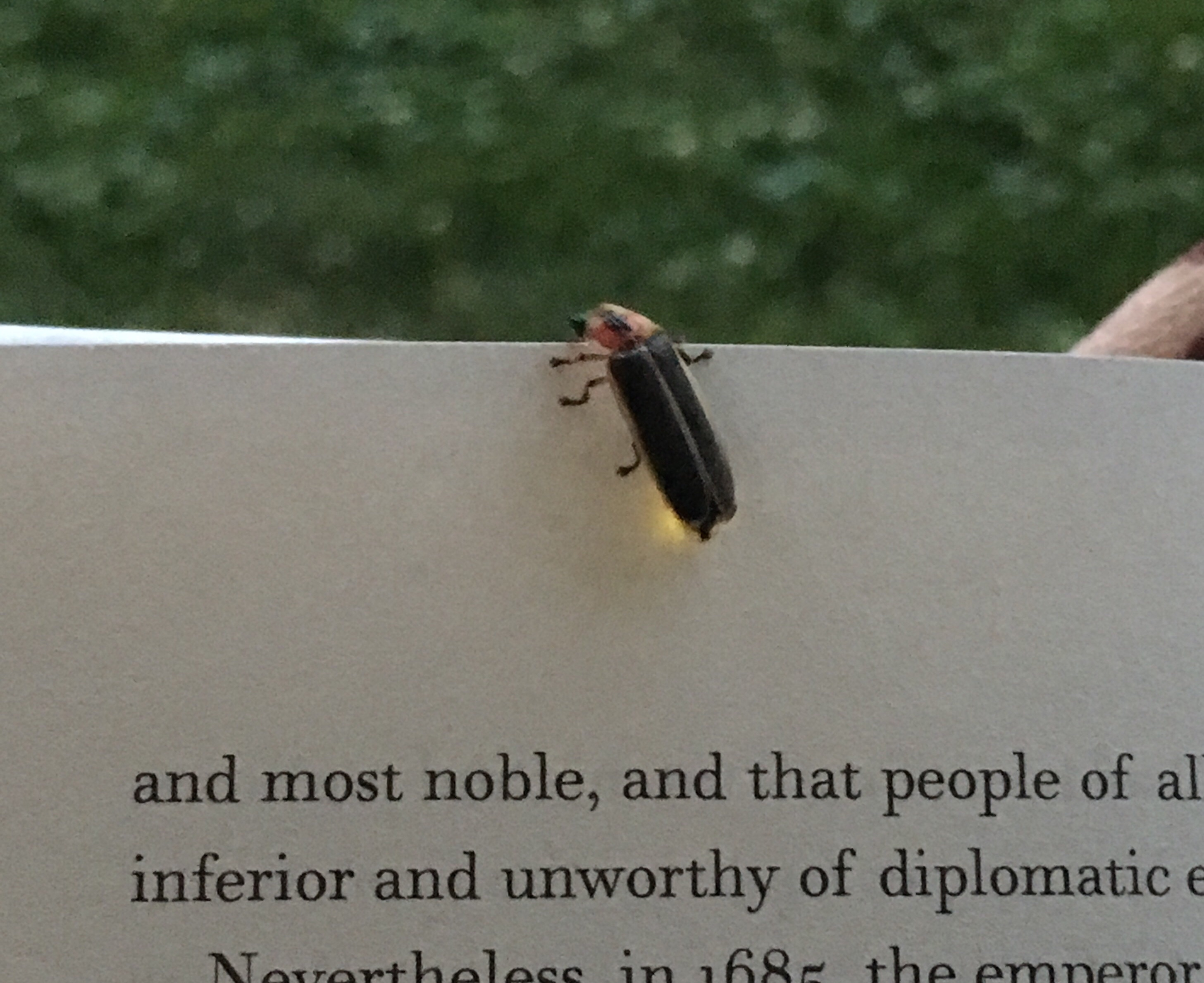 firefly on a book