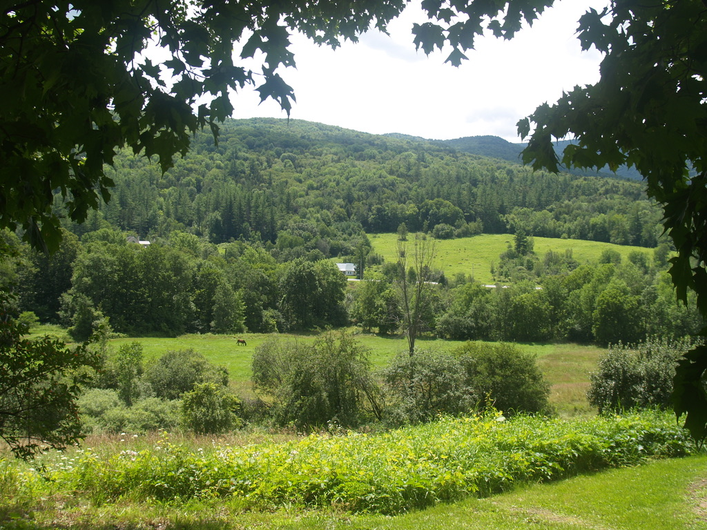 Landscape of green meadows framed by trees, in the distance green wooded hills. In the center a horse is grazing.